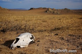 Mongolia - Death on The Steppe